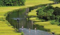 Mùa lúa chín là mùa cao điểm khi du khách trong và ngoài nước đến chiêm ngưỡng cảnh đẹp của Ninh Bình.