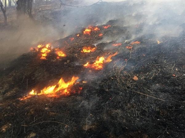 Cảnh báo cháy rừng ở Nghệ An ở cấp cực kỳ nguy hiểm