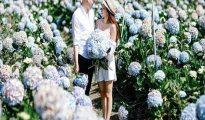 Ngắm vẻ đẹp lãng mạn của các vườn hoa cẩm tú cầu ở Đà Lạt