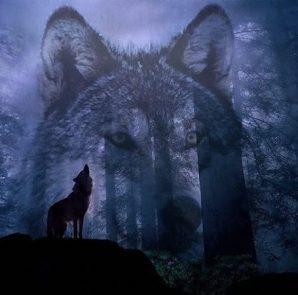 Mơ thấy chó sói mang điềm báo lành hay dữ?