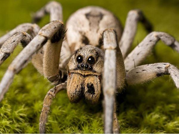 Mơ thấy nhện đánh con gì, là điềm báo lành hay dữ?