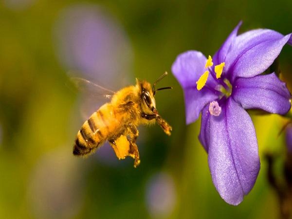 Mơ thấy ong là điềm báo lành hay dữ?